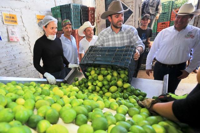 Resultado de imagen para Zacatecas fortalecerá el sector del limón